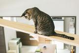 cat126IMGL5737_TP_V1