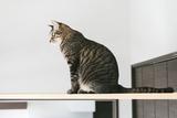 cat126IMGL5733_TP_V1
