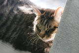 catIMGL5529_TP_V1