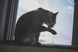 cat126IMGL5799_TP_V1