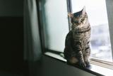 cat125IMGL5551_TP_V1
