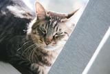 cat126IMGL5532_TP_V1
