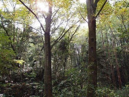 万葉の森Ⅱ