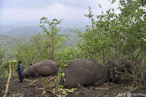 インドの山奥でゾウ18頭が死亡