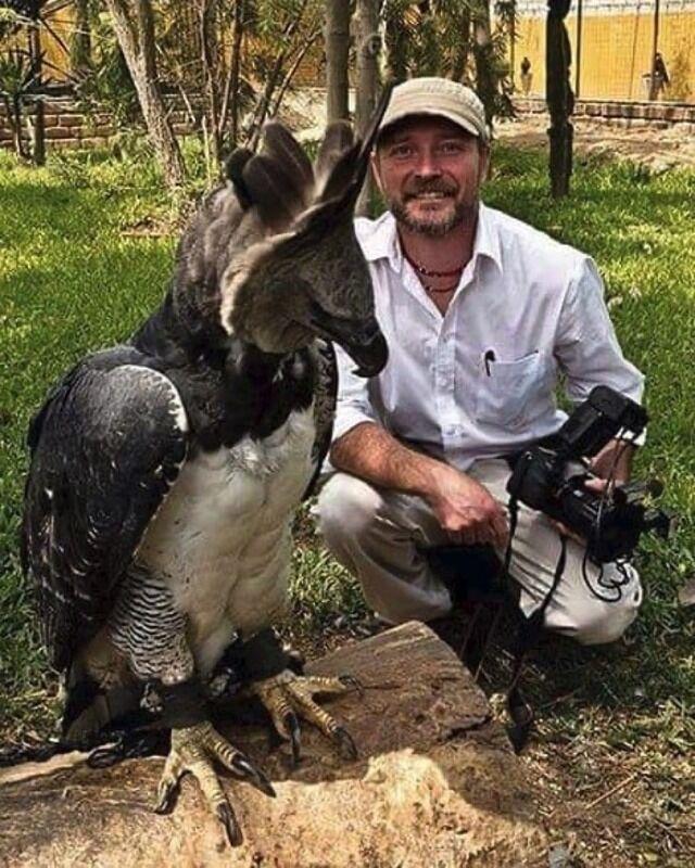 【画像】世界最大級の猛禽類の鳥さんの画像wwwwww