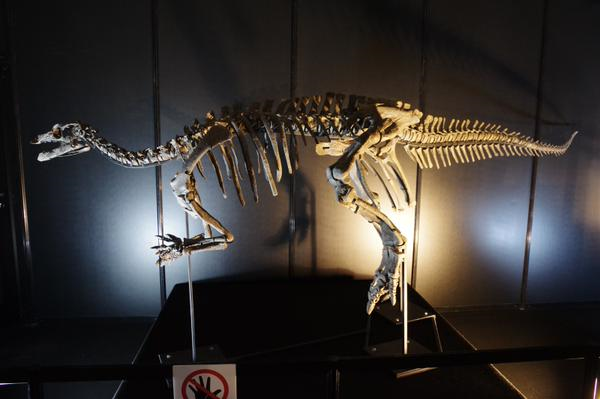 古代生物・文明】カンプトサウルス・大型の肉食恐竜によく狙われていた ...
