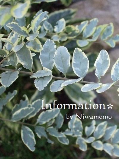 information1611_02