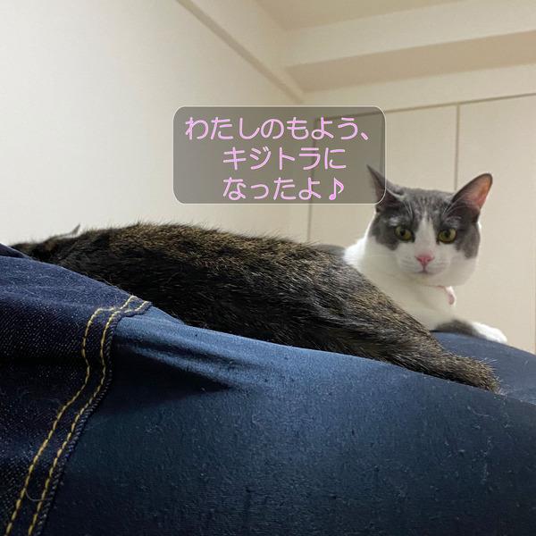 ニクス-メイ-ムーン3_210920_4