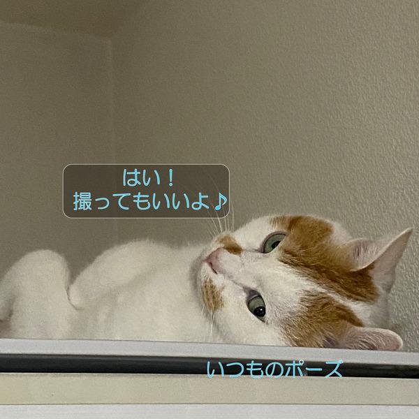 ニクス-メイ-ムーン3_210922_4