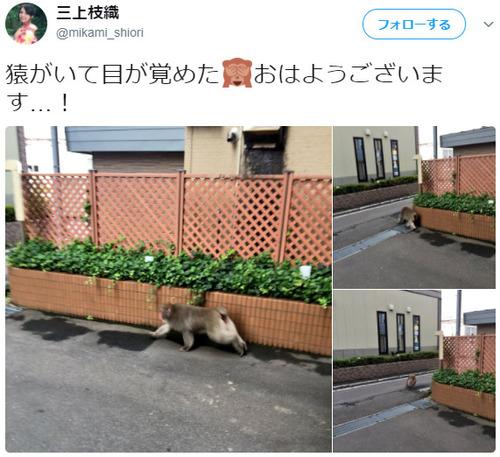 声優・三上枝織さん猿を発見し、TVに出る!!!