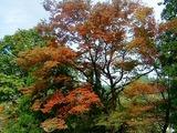 濁沢の秋2
