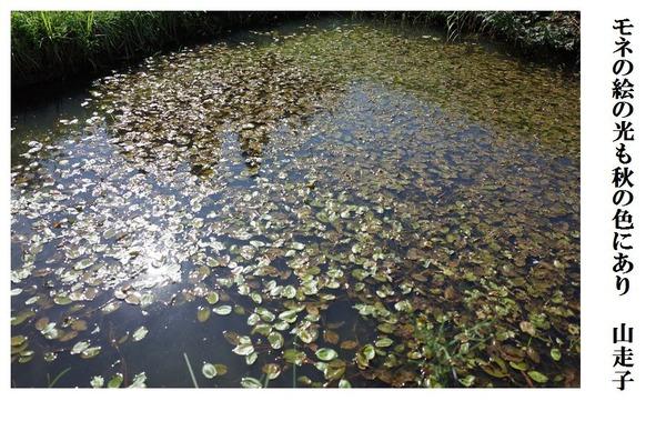 モネの絵の光も秋の色にあり