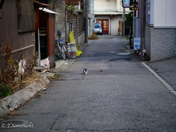 散歩 (1 - 1)-2