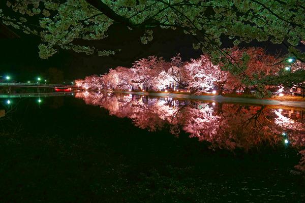 夜桜 (1 - 1)-2