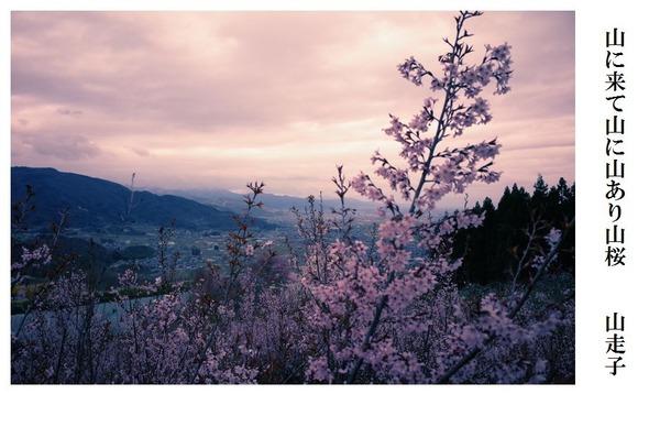 山に来て山に山あり山桜