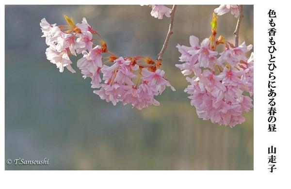色も香もひとひらにある春の昼