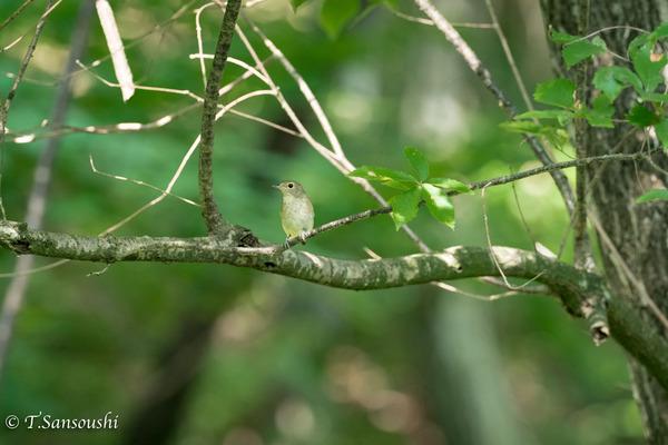 21 小鳥 (1 - 1)-3