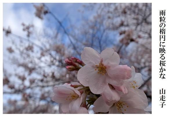 雨粒の楕円に映る桜かな