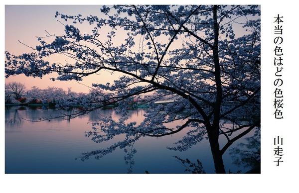 本当の色はどの色桜色