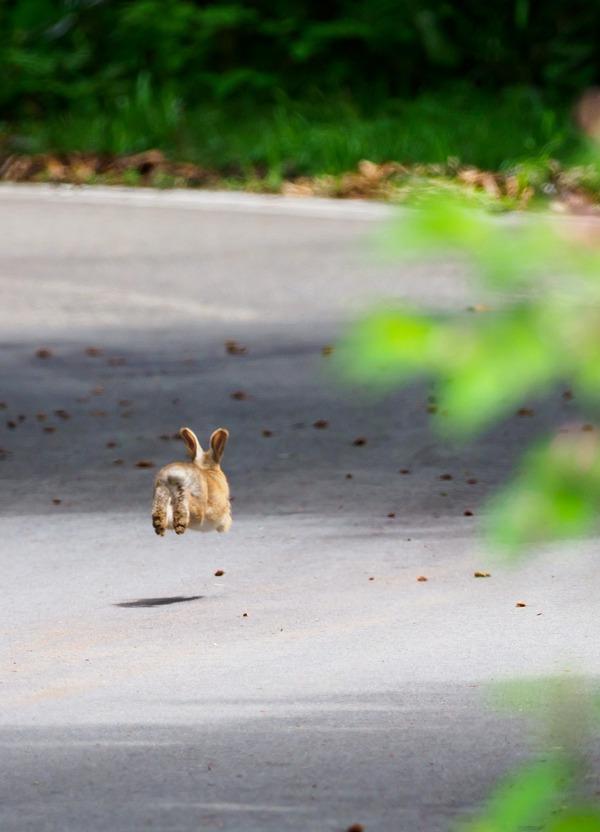 2018.06.14 ウサギ (1 - 1)-2