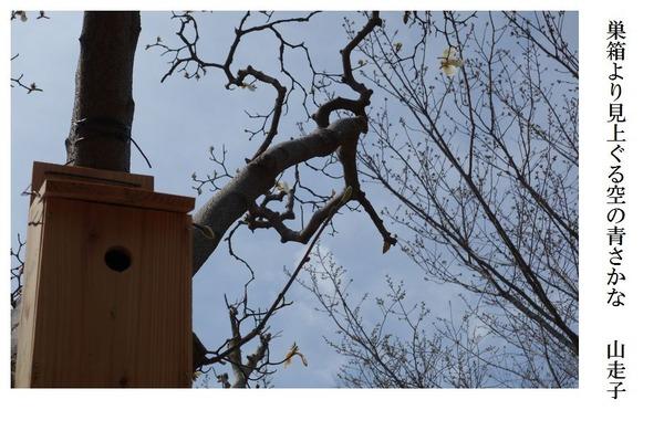 巣箱より見上ぐる空の青さかな
