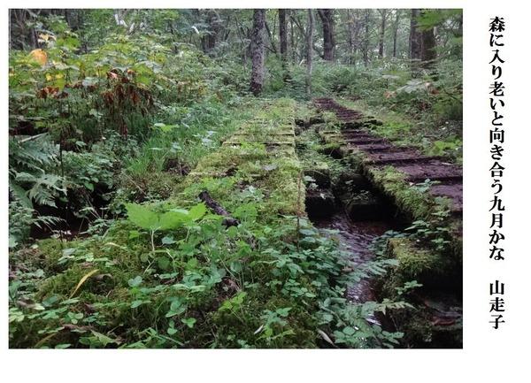 森に入り老いと向き合う九月かな
