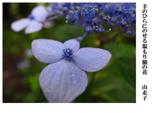 手のひらにのせる温もり額の花