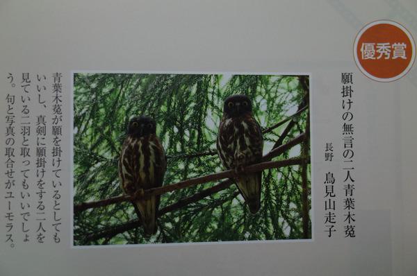 俳句界 (1 - 1)