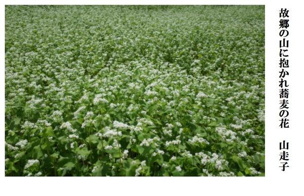 故郷の山に抱かれ蕎麦の花