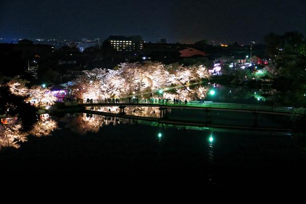 夜桜 (1 - 1)