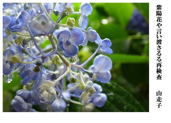 紫陽花や言い渡さるる再検査