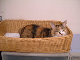 みーin the basket