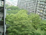 中庭が緑一色に