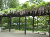 阿部さん、写真2010年5月 110