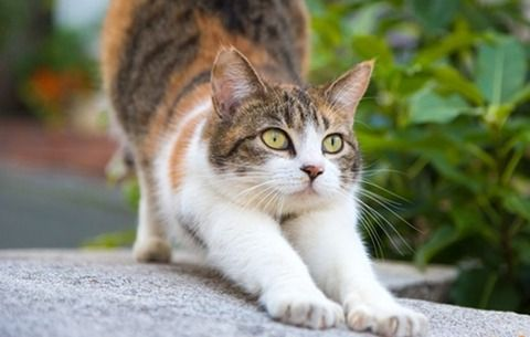 猫の画像を貼るスレ(画像あり)