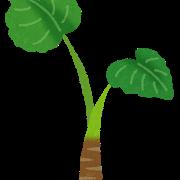 plant_kuwazuimo (1)