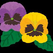 flower_pansy