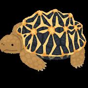 turtle_indohoshigame