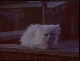 ソフトバンクの新CMは白い猫が登場