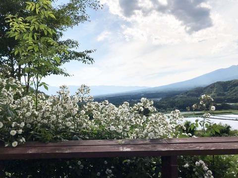 バラと八ヶ岳IMG_1173