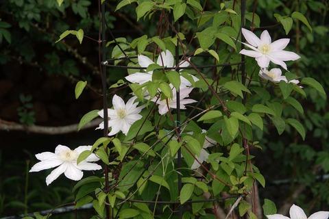 桜姫DSC05036