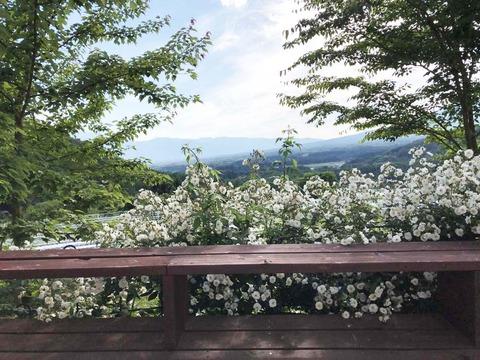 バラと八ヶ岳IMG_1166