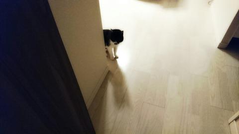 ストーカー猫(=^・^=)❤