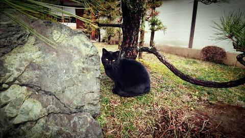 凛々しい黒猫ちゃん(=^・^=)