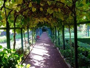 キャンティ バディアアコルティボーノの中庭7