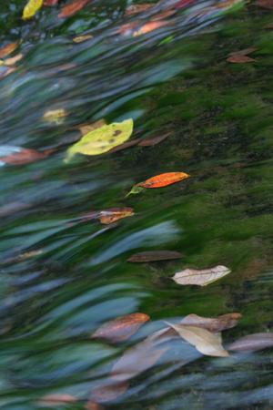 流水の落ち葉-2