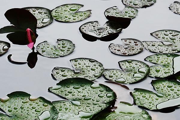 雨粒のビーズ