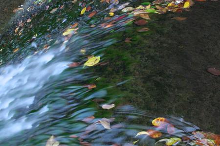 流水の落ち葉-1