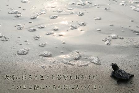 ウミガメ-1