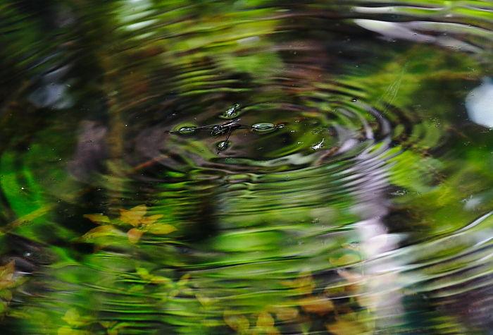新緑の波動